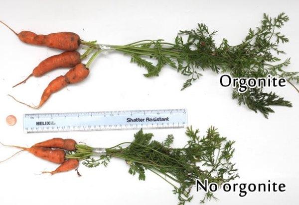 orgonite carrots Orgonite Urban Garden Set