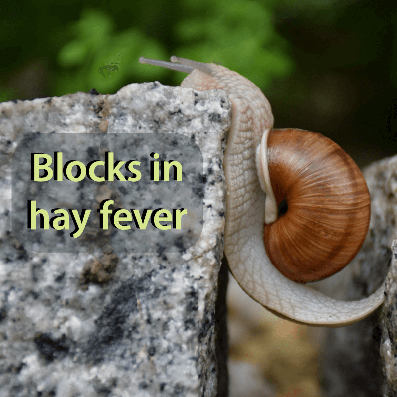 Snail climbing up a rock-face