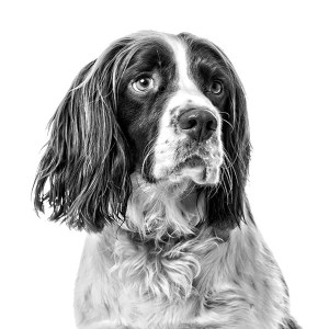 Image for pet studio portrait product