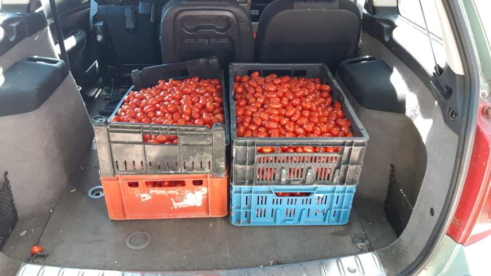 Bakken vol tomaten in de auto dankzij de actie van Greenco om zo verspilling van voedsel tegen te gaan