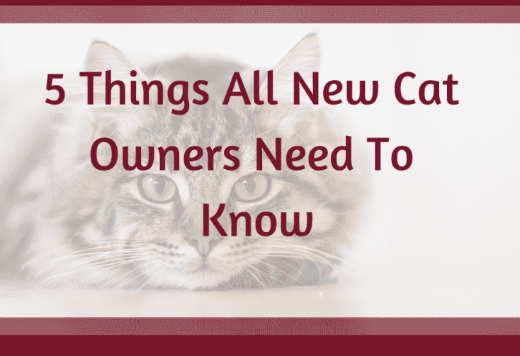 New cats owners