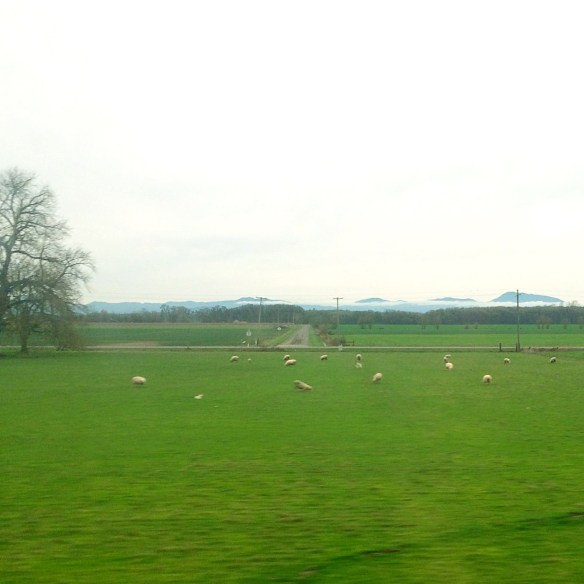 Blurry sheep as seen from a train