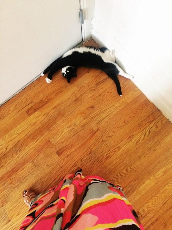 cat interupting a photoshoot