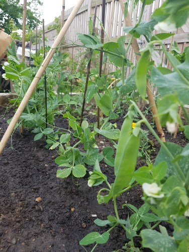 Allotment (8)