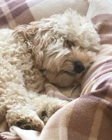 Poppy snooze (1)