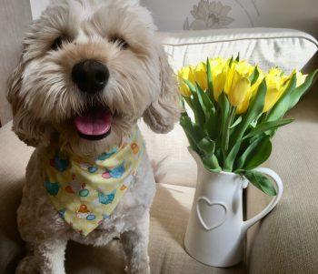 Poppy Easter 1