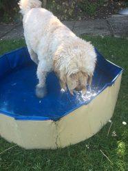 Poppy pool (2)