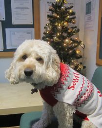 xmas jumpers (3)