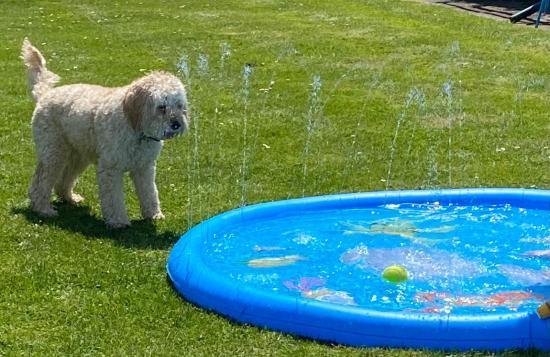 Poppy splash (2)