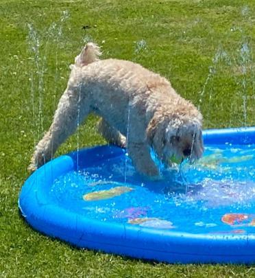 Poppy splash 3 (2)