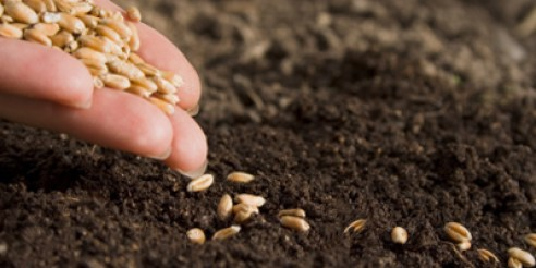 sowing-seeds