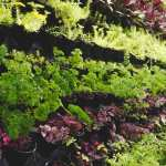 Top 8 Shade Loving Plants For Your Garden Holman Industries