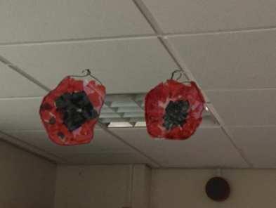 Calder Poppies (6)