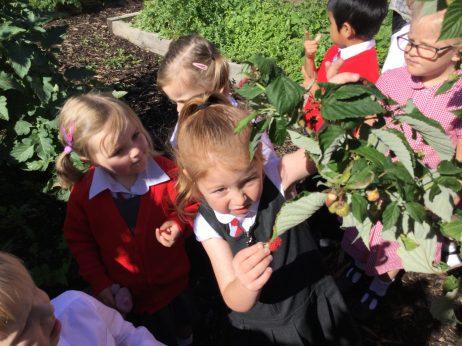 Eco Garden 3
