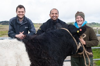 BANKS  KNOCKENDURRICK......Callum Whiteford, left, and Stuart Baungally, centre with Kirsty Graham and some of her father's Belted Galloway cows.  (c) WULLIE MARR/HPR