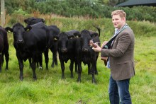 Musician Colin Clyne plays his guitar in a field with black cows in the background
