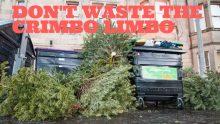 Scottish PR photograph of old Christmas trees to accompany a blog post on Christmas PR
