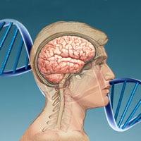 ¿Es genética la inteligencia?