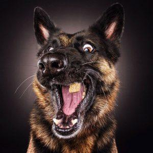 perro-5