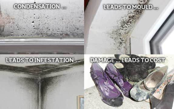 Home and Dry  Home and Dry Condensation Mold and Mildew