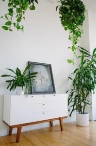 観葉植物の飾り方のコツ ー葉を垂らす