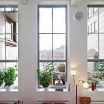 窓辺に観葉植物