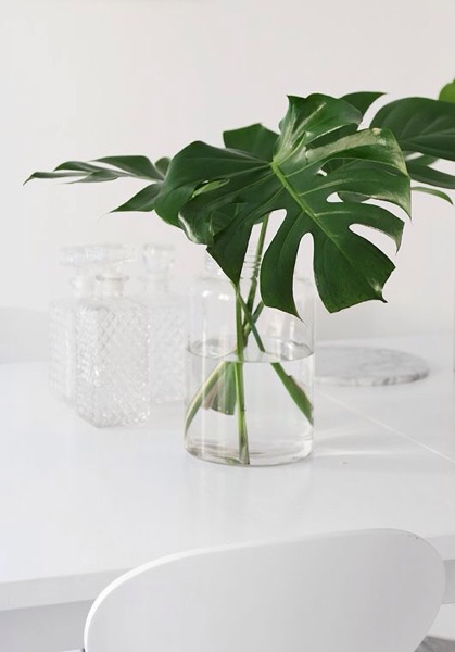 エキゾチックな観葉植物、モンステラのある部屋