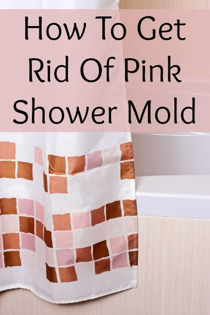 Pink Shower Mold What is It? How do I get rid of it ...