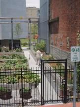 New Orleans Urban Garden