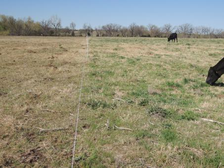 Obvious Benefits of Intensive Rotational Grazing