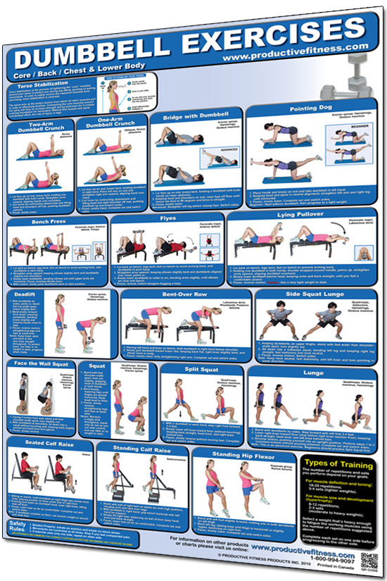 Dumbbell Exercises Poster  Lower Body Core and Chest