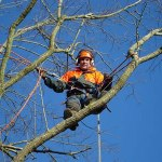 Tree Removal Cost Guide:Tree Surgeon Costs in the UK