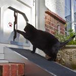Cat Flap Door Installation Cost in 2017