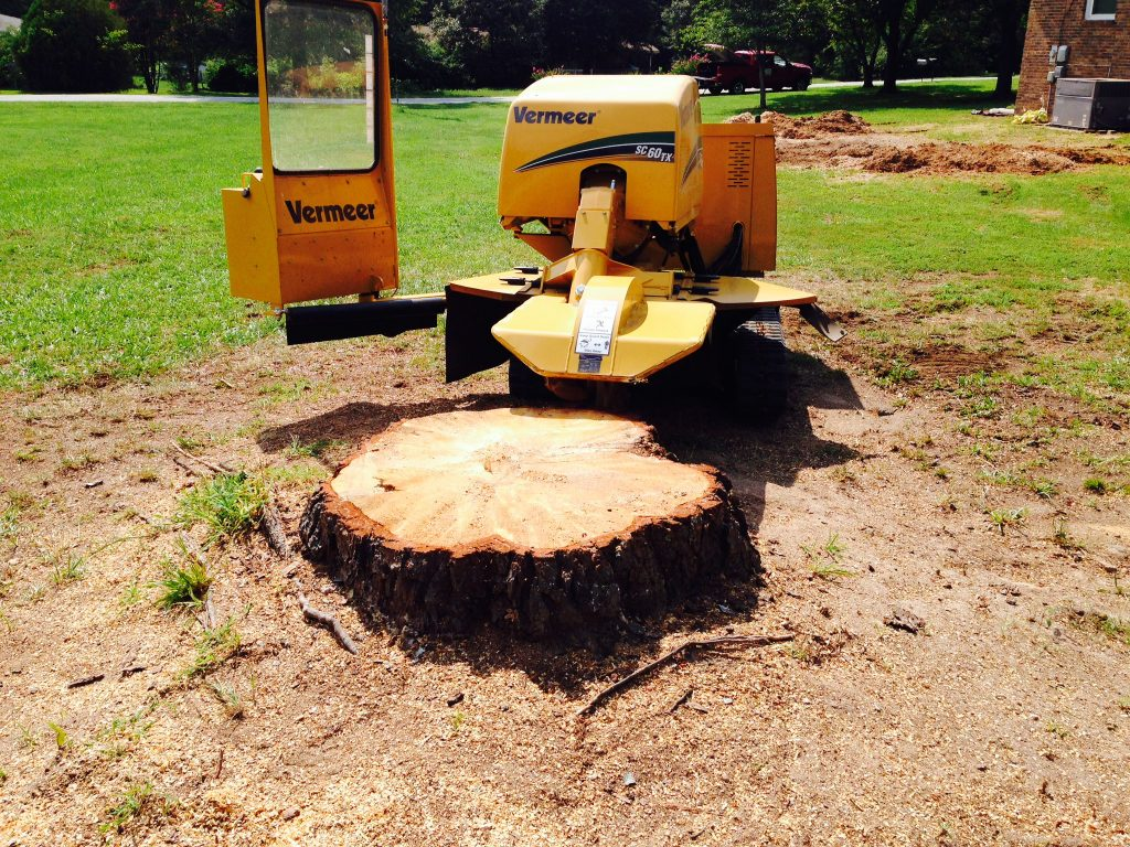 true kitchen equipment racks tree stump removal methods & tips | homeadvisor