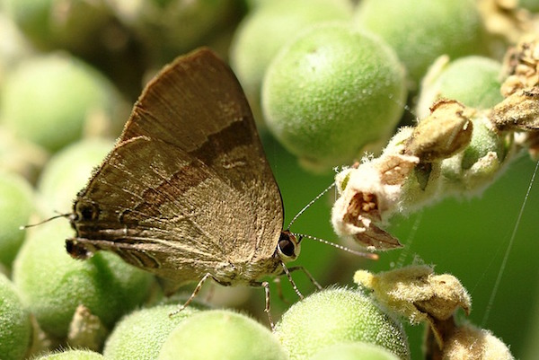 Moth Control  Moth Infestation  Cedar Closets