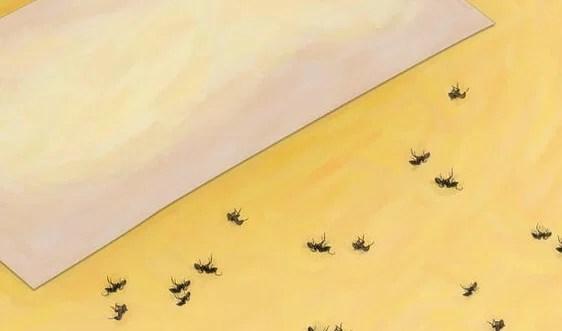 brown gnats bathroom : brightpulse