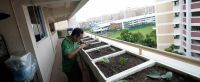 5 tips to help you start a mini farm in your HDB flat ...