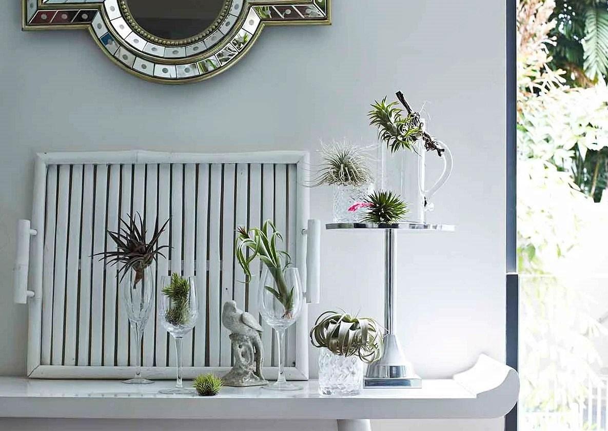 9 unique ideas to display indoor plants  Home  Decor