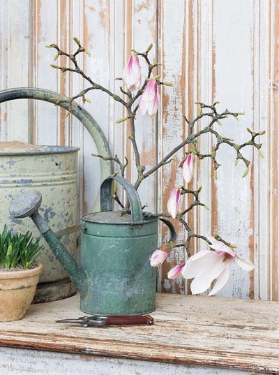 Magnoliatak op vaas  Homeandgardennl