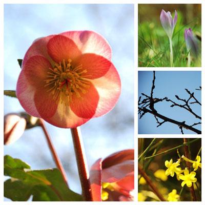 Tuinieren in februari
