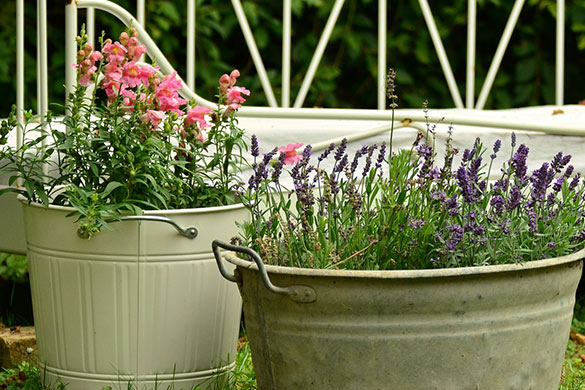 Container gardening in yard with limited space