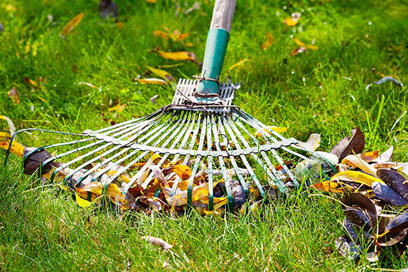 Early spring lawn maintenance and care raking debris