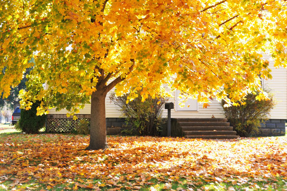 Lawn garden and tree care for the fall