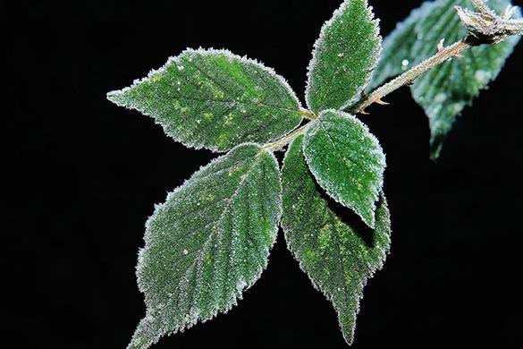 Summer garden diy tips and ideas avoid late season frost