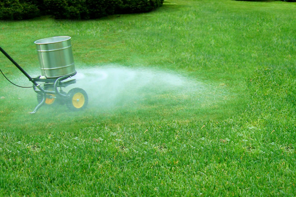 Grass lawn fertilizing for the fall
