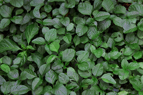 Summer garden diy tips and ideas growing spinach