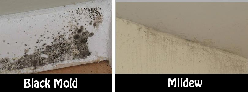 Natural and Simple Solutions to Rid Your Home of Mold and ...