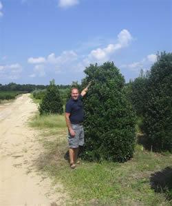 Oak Leaf Holly Image