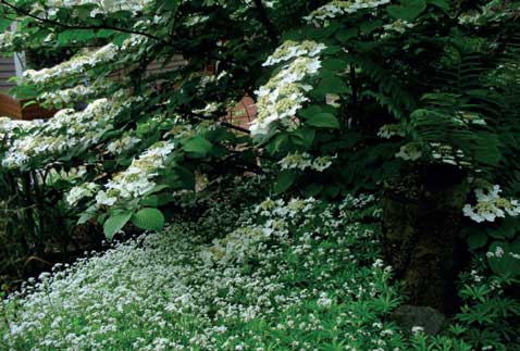 Gardens with Fewer Colours - Home and Lifestyle Magazine