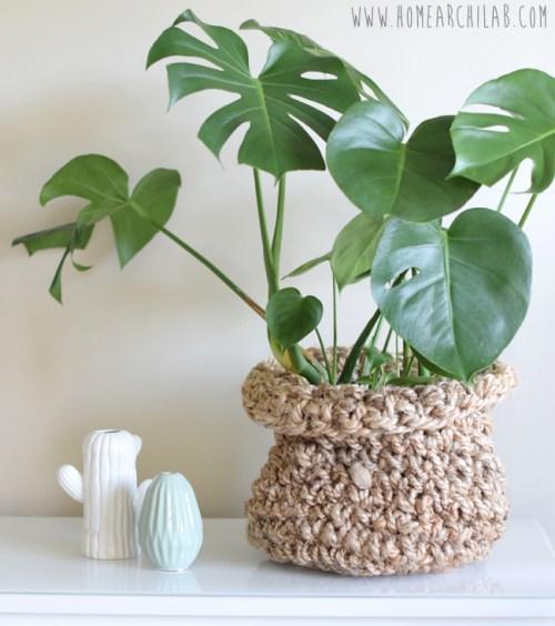 plantas fáciles de cuidar